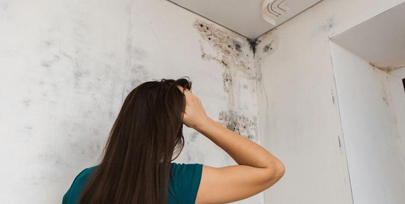 Mold Clean Crisp Air