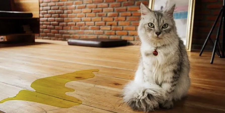 Cat pee on the floor